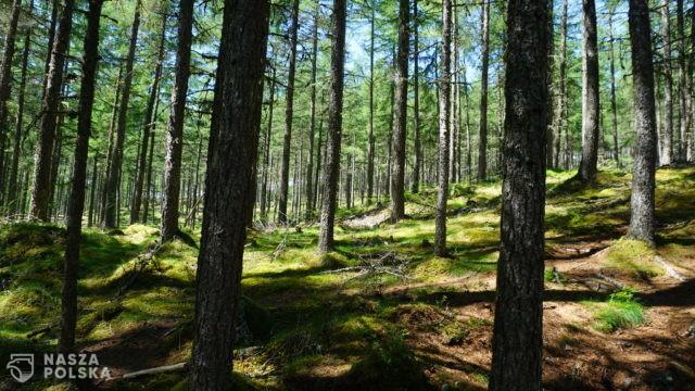 Koronawirus już nie przeszkodzi w wejściu do lasu, ale może zrobić to pogoda
