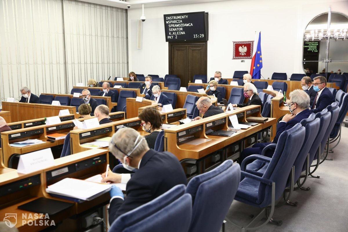 Konsultacje społeczne w Senacie. Trwają prace nad ustawą o ochronie zwierząt