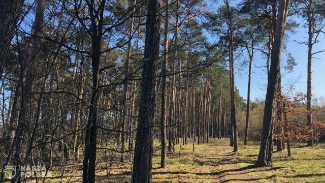 Zwiększyło się zagrożenie pożarowe w polskich lasach