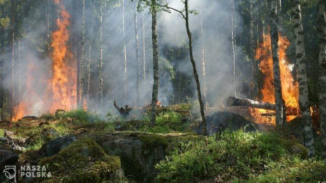 Strażacy ostrzegają przed pożarami lasów