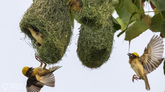 Ludzie znacząco przyczynili się do wymierania ptaków