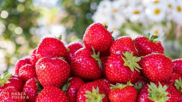 https://naszapolska.pl/wp-content/uploads/2020/05/strawberries-5099527_1920-640x360.jpg