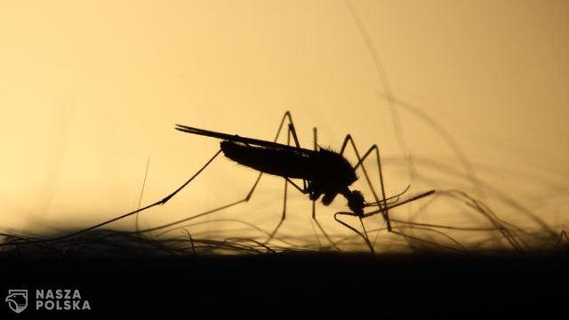 https://naszapolska.pl/wp-content/uploads/2020/06/mosquito-3860900_1920-640x360.jpg