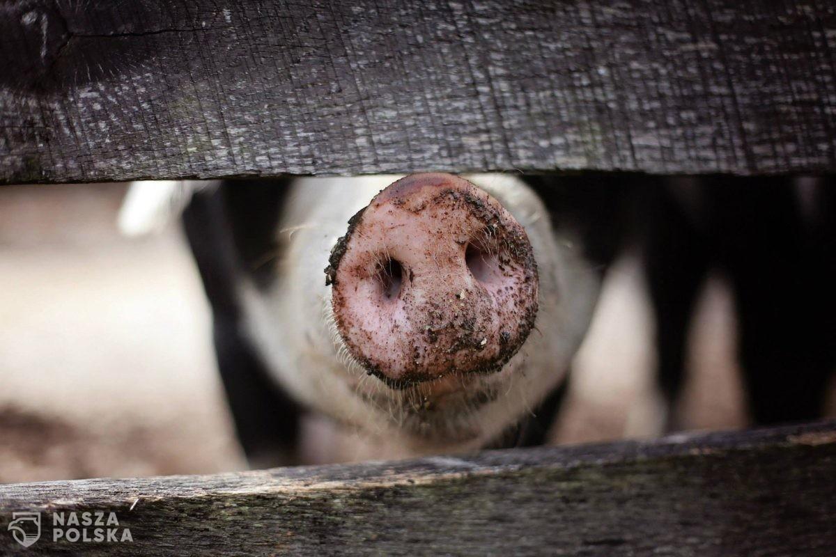 """PiS nie wycofuje się z """"piątki dla zwierząt"""", ale też się nie spieszy"""
