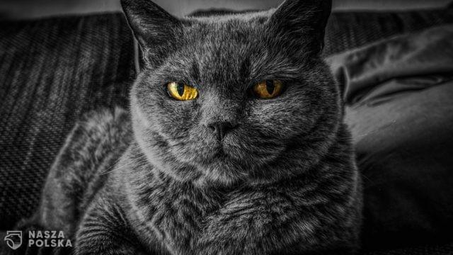 https://naszapolska.pl/wp-content/uploads/2020/07/cat-2143332_1920-640x360.jpg