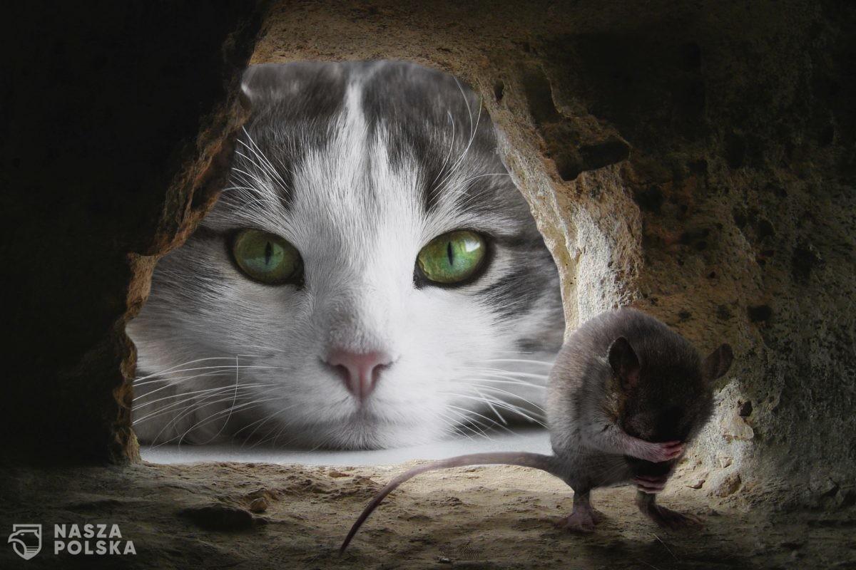 Już 6 tys. lat temu koty wspierały ludzi w walce z gryzoniami