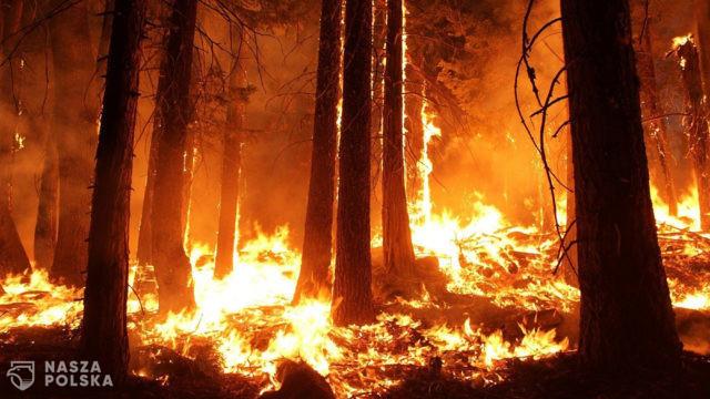 [PILNE!] Płoną polskie lasy! Trzeci, najwyższy stopień zagrożenia!