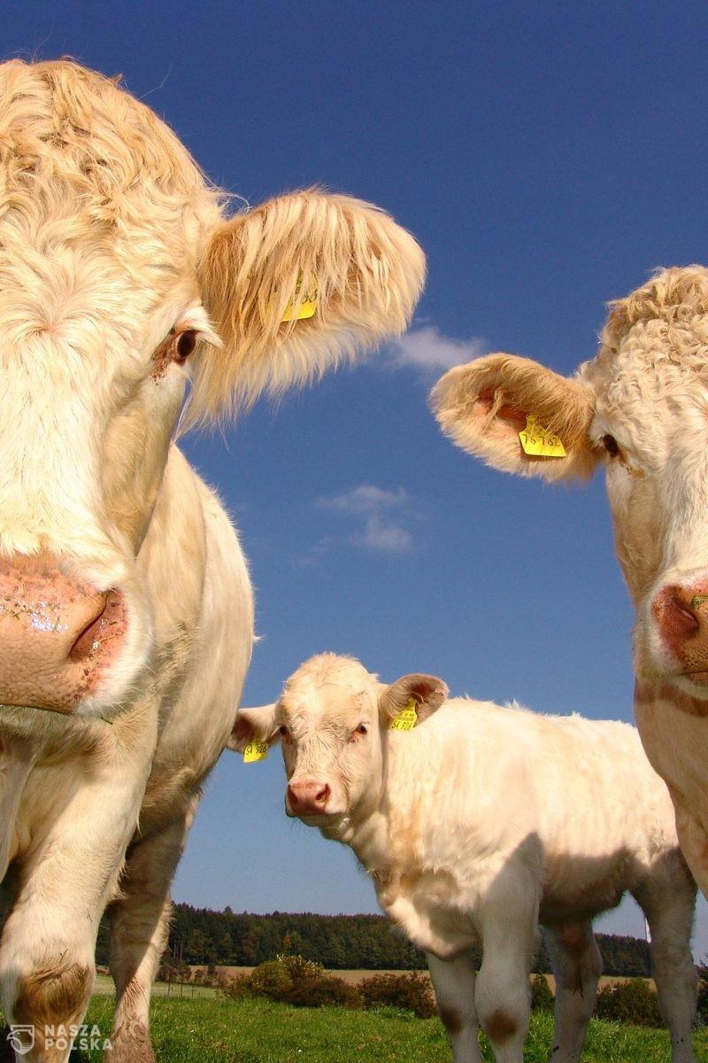 Dzięki piątce dla zwierząt z dnia na dzień pracę stracą tysiące pracowników