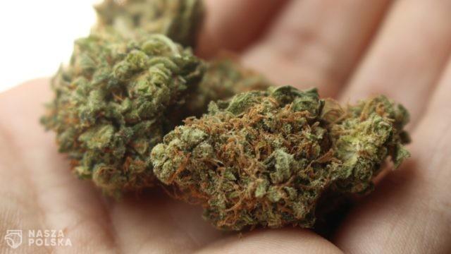 Powstają trzy projekty ustaw dotyczące legalizacji marihuany