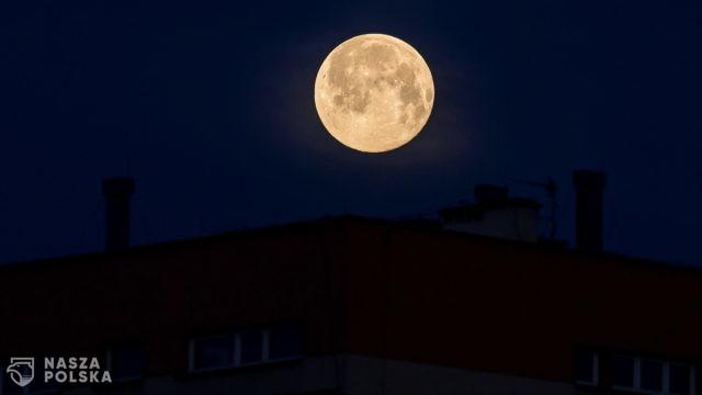 Wilczy księżyc – Kraków
