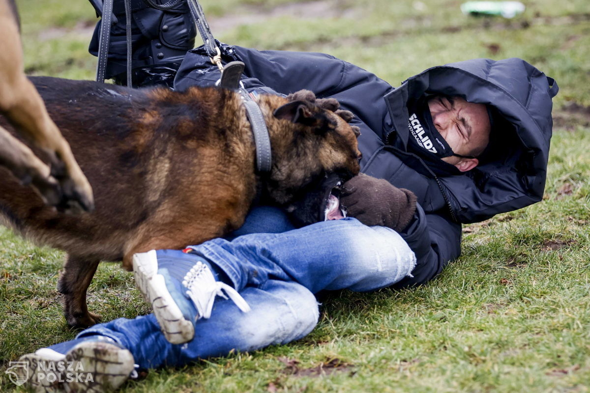 [FILM] Holandia/ Protest przeciwko restrykcjom epidemicznym. Policja użyła psów