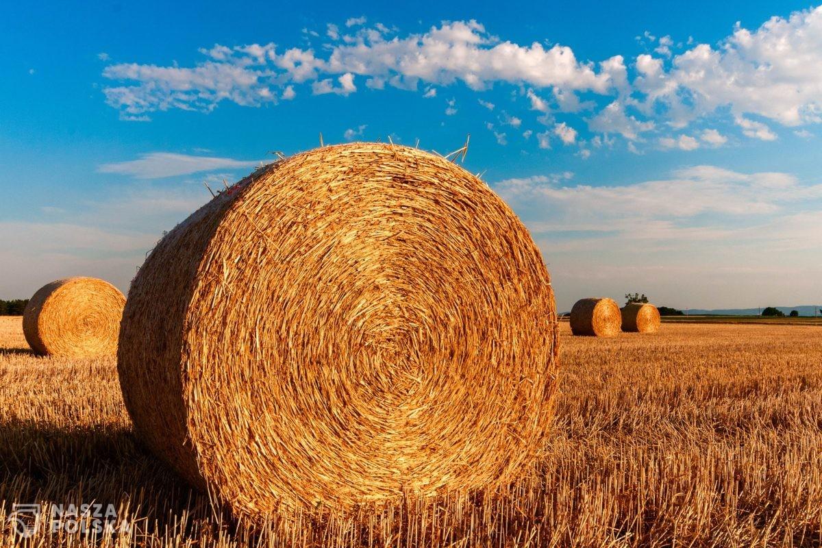 Projekt ustawy o rodzinnym gospodarstwie rolnym przywróci godność rolnika?