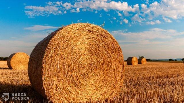 PSL domaga się przekazania 10 proc. na rolnictwo z Krajowego Planu Odbudowy