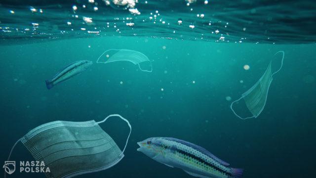 Zużyte maseczki na dnie oceanu, tony medycznych śmieci zanieczyszczają rafy