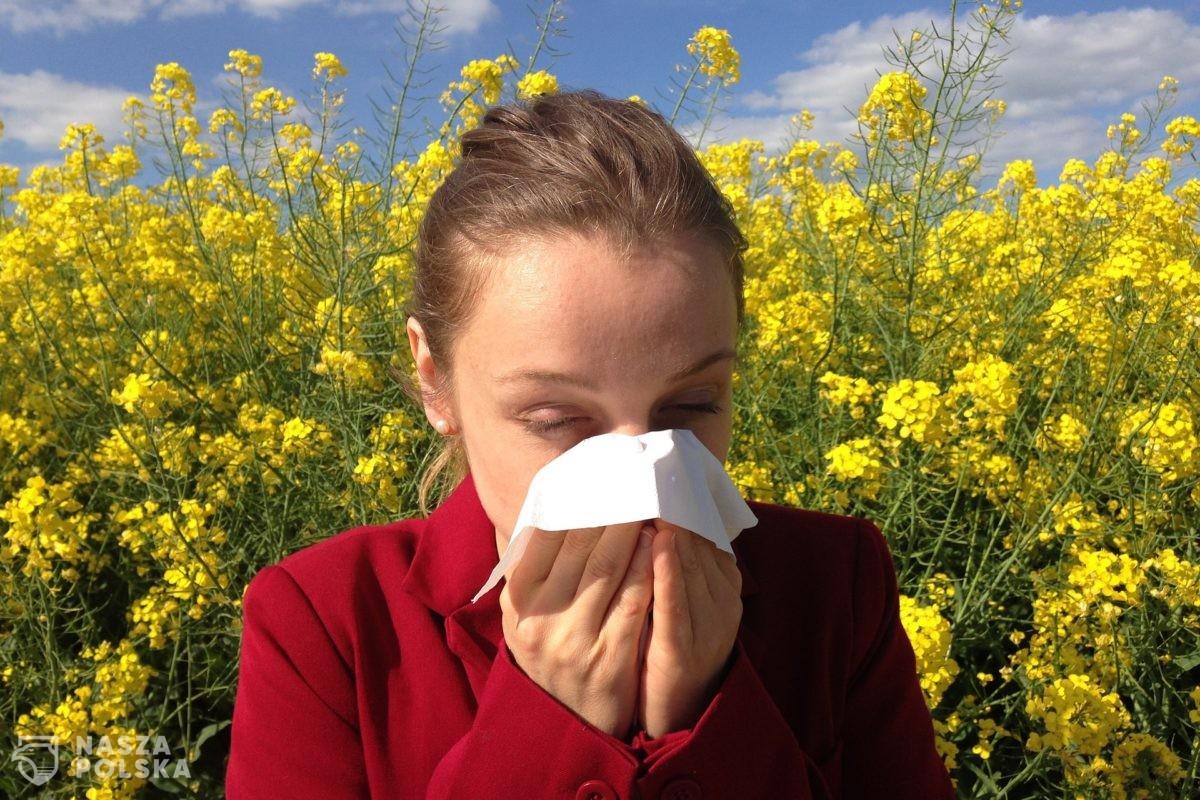 Alergolog: przyjmujący leki alergicy są mniej podatni na zakażenie COVID-19 i jego ciężki przebieg