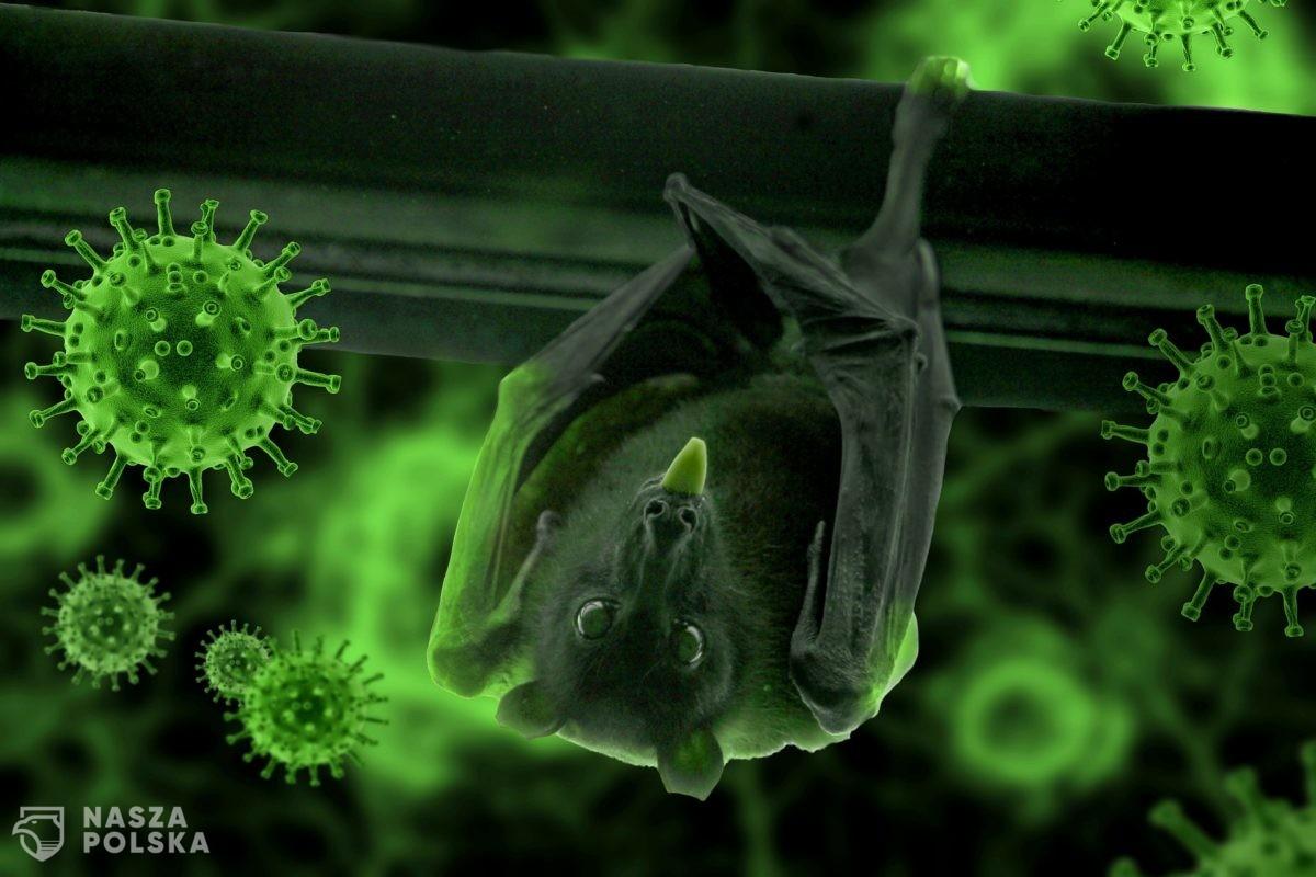 """AFP: raport WHO o genezie Covid-19 odrzuci teorię """"wycieku"""" z laboratorium"""