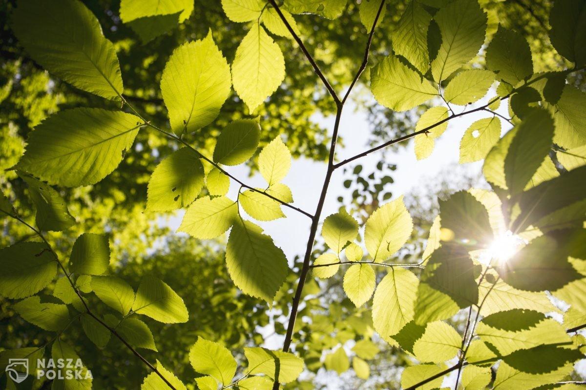 Badanie/ O zakażenie koronawirusem trudniej m.in. przy wysokiej temperaturze i dużej ilości słońca