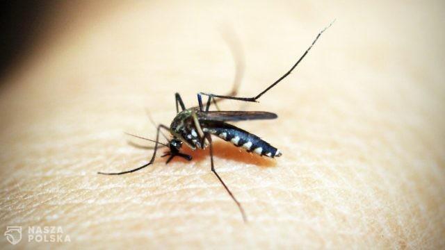 Szczepionka przeciwko COVID-19 pół roku, przeciwko malarii pół wieku