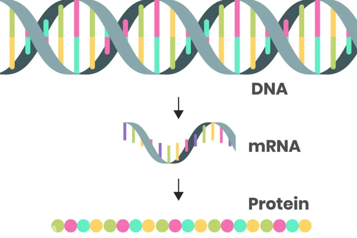 Naukowiec o szczepionkach mRNA: Białko kolca jest toksyczne i niebezpieczne dla ludzi. Czy ma rację?