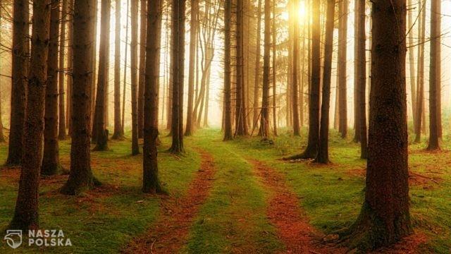 Do czego prowadzą drogi leśne?
