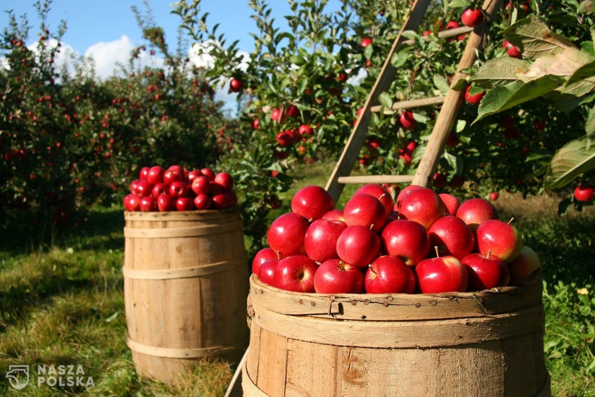 Wojciechowski: małe i średnie gospodarstwa będą preferowane w polityce rolnej