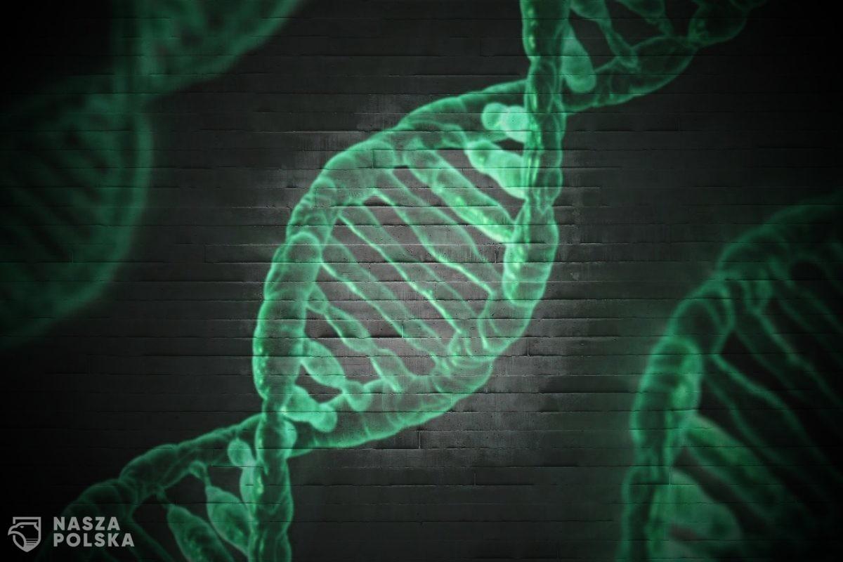 """Afera genowa: azjatyckie firmy """"o wątpliwej reputacji"""" mogą dysponować genomami ok. 100 tysięcy Polaków!"""