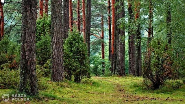 Wiceminister Siarka: strategia leśna UE zagraża przyszłości polskich lasów i gospodarce